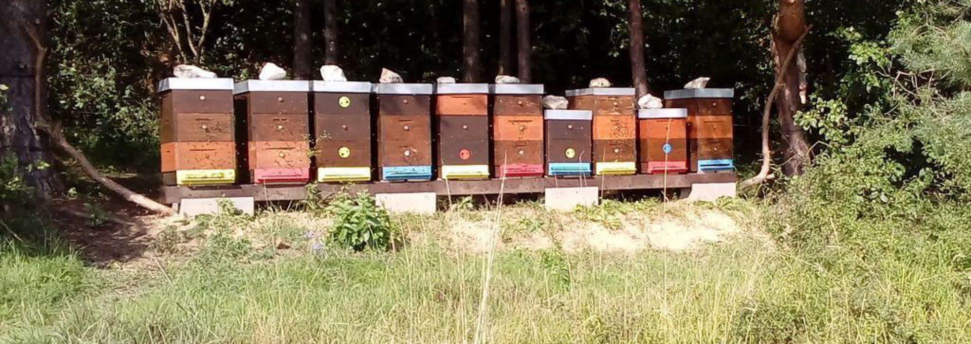 Slovenský včelár